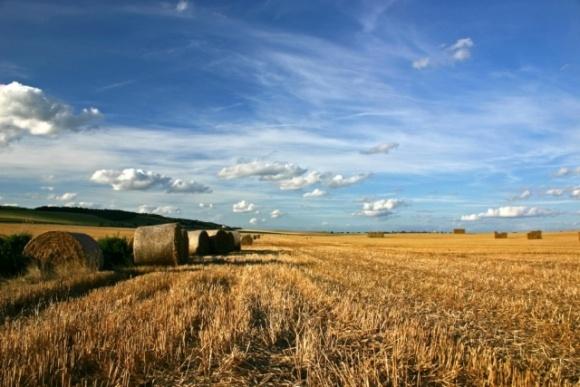 Аграрии просят ускорить запуск программ господдержки АПК фото, иллюстрация