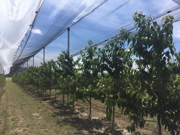 Садоводы и производители ягод решили самостоятельно спасаться от непогоды фото, иллюстрация