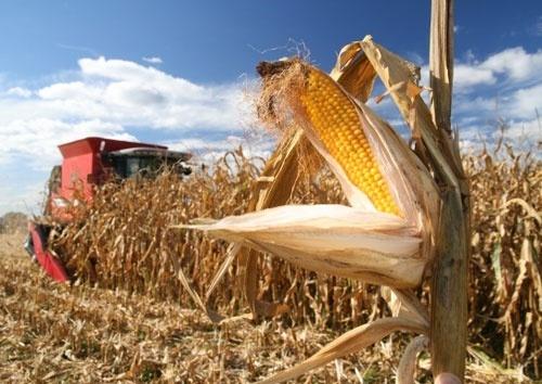 Аграрии Полтавщины намолотили пять миллионов тонн зерновых культур фото, иллюстрация