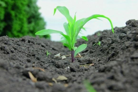 Агролайфхак: элементы питания повышают стрессоустойчивость растений фото, иллюстрация