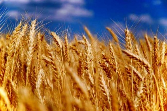Экспорт зерновых в новом маркетинговом году снизится до 41 миллиона тонн, – Минагрополитики фото, иллюстрация