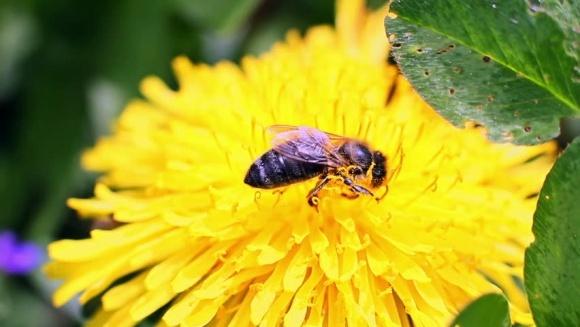 EFSA заявило о токсичности неоникотиноидов для пчёл фото, иллюстрация