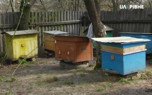 Мор бджіл: торішня проблема повертається фото, ілюстрація
