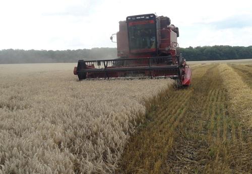 На Сумщині обмолочено 30% площ ранніх зернових і зернобобових фото, ілюстрація