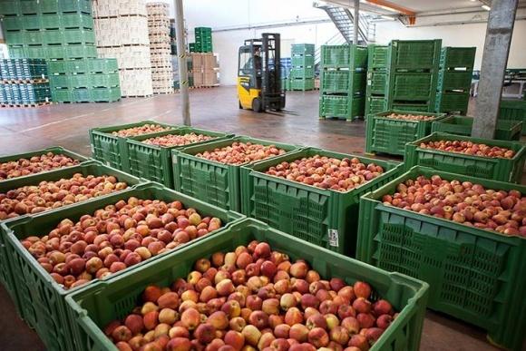 Польський досвід тривалого зберігання яблук у фруктосховищах фото, ілюстрація