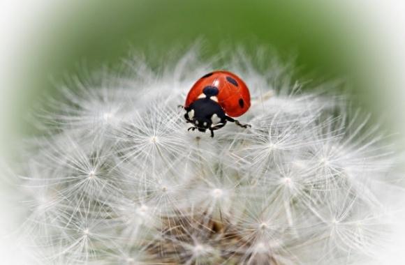 Зниження чисельності комах серйозне. І не останню роль в цьому відіграло сільське господарство фото, ілюстрація
