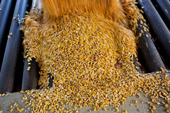 Украина в этом МГ имеет все шансы увеличить поставки кукурузы в страны ЕС и Китая фото, иллюстрация