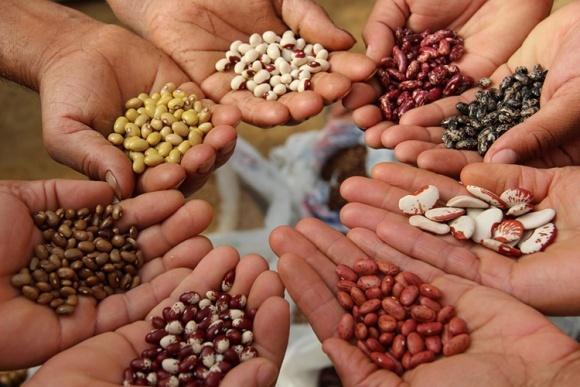 За четыре сезона экспорт фасоли из Украины вырос почти в пять раз фото, иллюстрация