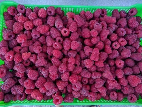 Рынок малины: украинская VS польская фото, иллюстрация