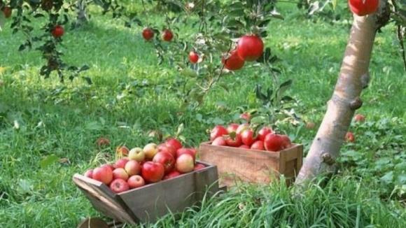На Волині планується закласти 100 га плодово-ягідних насаджень фото, ілюстрація