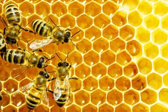 У США зросло поголів'я бджіл. Хоча неонікотиноїди не забороняли фото, ілюстрація