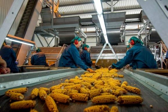 """Агрохолдинг """"Лебединський насіннєвий завод"""" придбав 100% акцій рослинницького бізнесу  """"Шпола-Агро Індустрі"""" в Черкаській області фото, ілюстрація"""