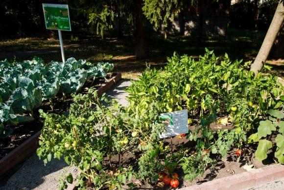 Міське городництво, психологічне здоров'я та сімейне дозвілля у проекті Syngenta фото, ілюстрація