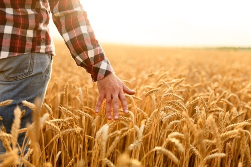 Найбільші отримувачі аграрних дотацій фото, ілюстрація