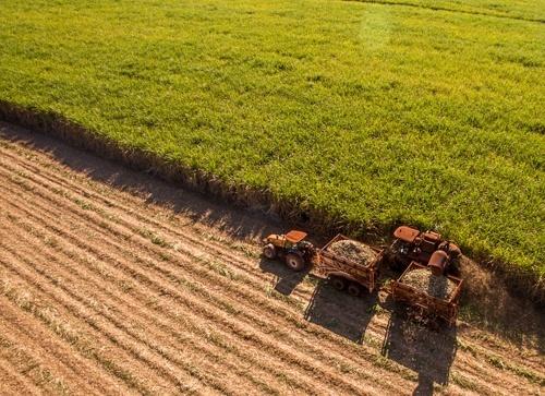 Денис Полежаєв про прогнози аграрного ринку фото, ілюстрація