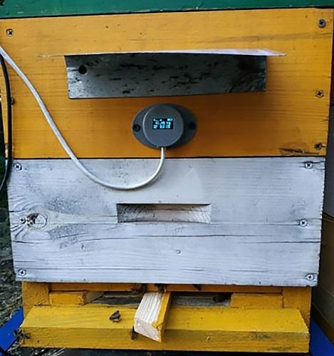 Розумний вулик: бджоли працюють, а пасічник відпочиває вдома фото, ілюстрація