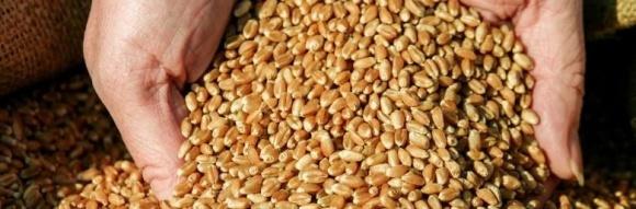 На Вінниччині зібрали рекордний врожай зерна  фото, ілюстрація
