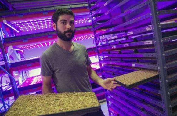 В Канаде создано вертикальное агрохозяйство с применением космических технологий фото, иллюстрация