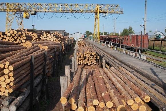 ЄС готова заплатити, щоб Україна скасувала мораторій на експорт лісу, - нардеп фото, ілюстрація