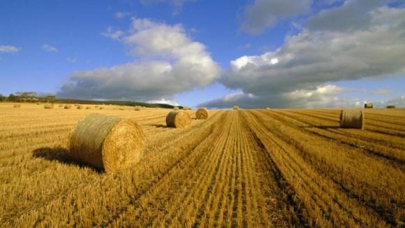 Фермери володіють 10% всіх аграрних земель в Україні фото, ілюстрація