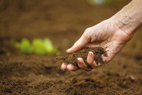 Уряд запропонує фермерам пільгову ставку на купівлю землі фото, ілюстрація