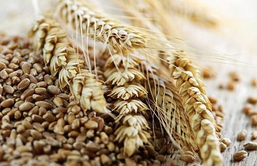 Причерноморское зерно на рынках Юго-Восточной Азии: перспективы и сложности фото, иллюстрация