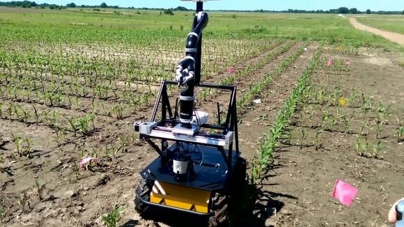Роботи витіснили людину з процесу вирощування кукурудзи фото, ілюстрація