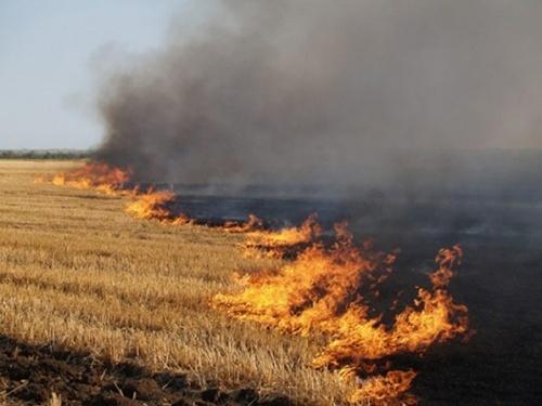 В Кировоградской области сгорело 19 га пшеничного поля фото, иллюстрация