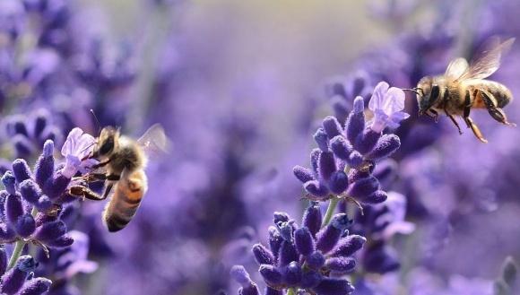 Ученые изобрели волшебное гнездо для изучения жизни пчел   фото, иллюстрация