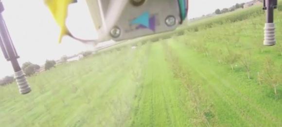 В Італії розробили дрон для штучного запилення волоського горіха фото, ілюстрація