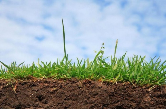На Херсонщине 4% сельхозземель сертифицированы как органические фото, иллюстрация