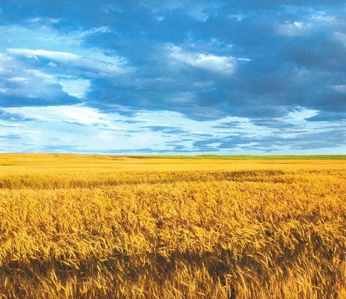 За певних умов українська земля може коштувати 8000 доларів/га, — доцент Київської школи економіки фото, ілюстрація