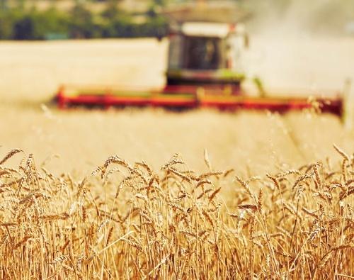 У 2018 році вітчизняні аграрії встановили абсолютний рекорд за обсягами експорту сільгосппродукції, – Микола Пугачов фото, ілюстрація