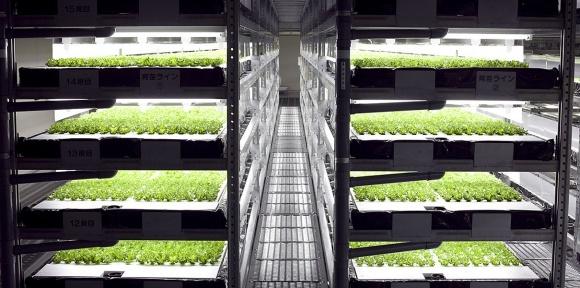 Роботизированные вертикальные фермы решат проблему нехватки овощей  фото, иллюстрация