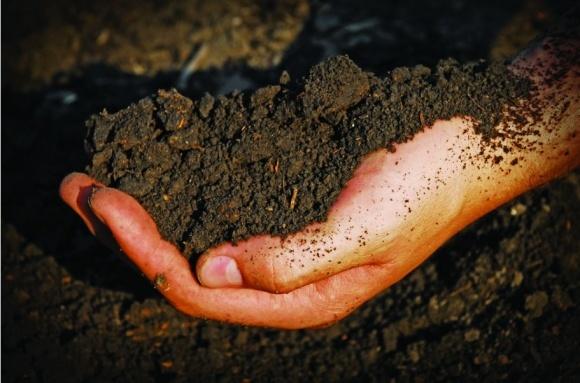 Як урожайність залежить від мікробів? фото, ілюстрація