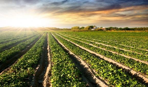 Инвестиции Эпицентра в аграрное направление - более 1,1 млрд гривен, запланированная выручка - 4 млрд гривен фото, иллюстрация