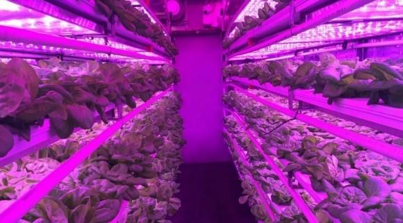 Каліфорнійські винахідники вирощують овочі у трейлерах-вантажівках фото, ілюстрація
