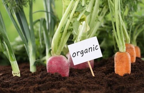 Україна може зайняти нішу в світовому ринку органіки, - Галашевський фото, ілюстрація