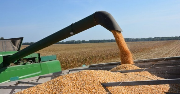 Grain Alliance собрала более 40 тыс тонн подсолнечника фото, иллюстрация