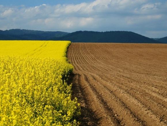 Названы самые продуктивные сельхозземли Украины фото, иллюстрация
