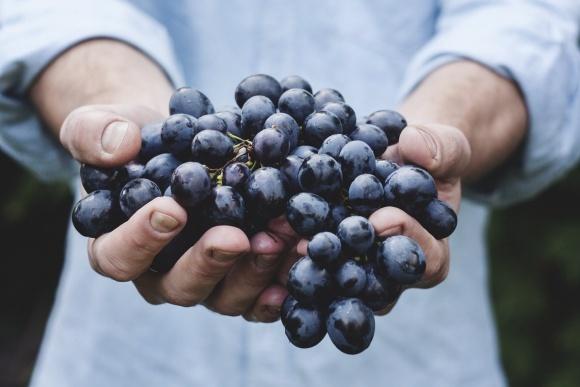 Агролайфхак: сколько стоит построить хранилище для винограда? фото, иллюстрация