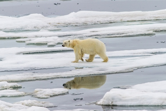 Екстремально спекотне літо прискорило танення льодовиків в Арктиці фото, ілюстрація