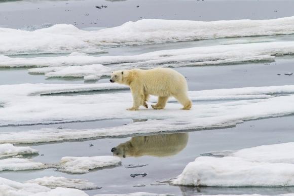 Экстремально жаркое лето ускорило таяние ледников в Арктике фото, иллюстрация