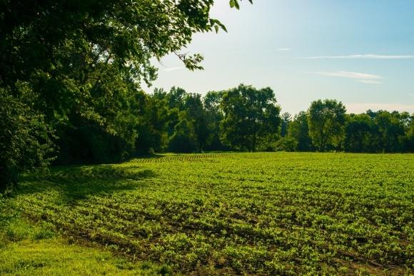Разработана технология точного определения потребности растений в азоте фото, иллюстрация