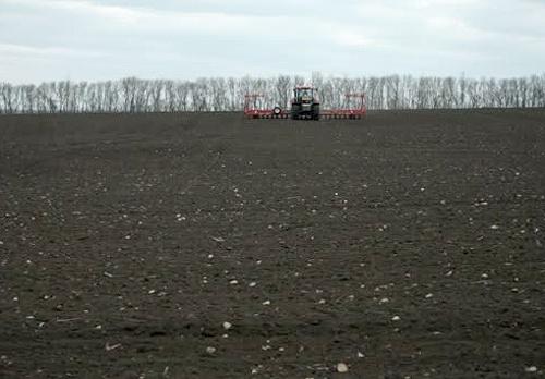 Дві третини запланованих площ в Україні вже засіяно цукровими буряками фото, ілюстрація