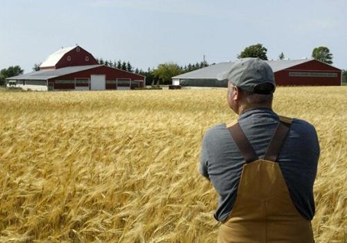Чем обернется для украинцев открытие земельного рынка фото, иллюстрация