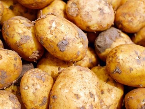 Коли в Україні почне дешевшати картопля фото, ілюстрація