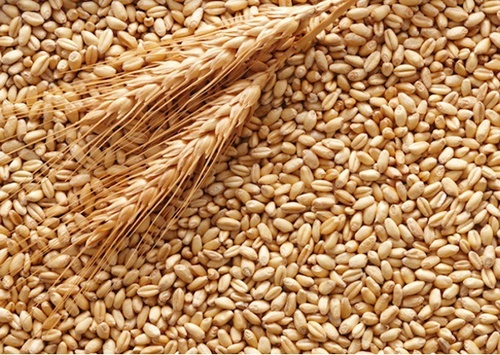 Експорт з України зернових, зернобобових та борошна фото, ілюстрація