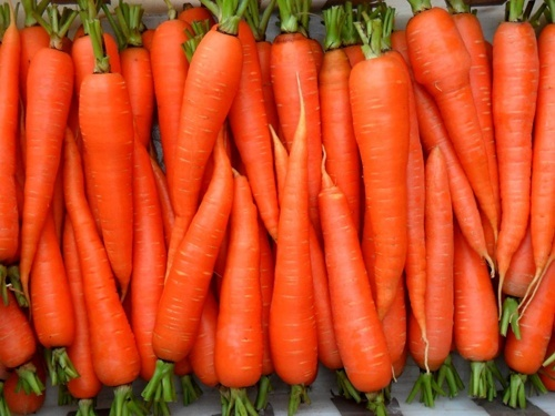 Морковь, в начале мая, стала лидером по темпам подорожания на рынке «Борщевого набора» фото, иллюстрация
