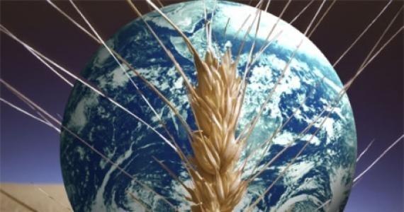 Глобальная нехватка продовольствия может снизиться к 2027 году фото, иллюстрация